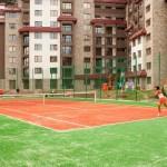 камелия_тенис